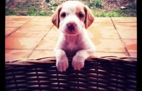 Sección para informar sobre perros que buscan hogar