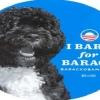 """La campaña política que arrasó en Facebook: """"Las mascotas aman a Obama"""""""