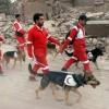 Héroes caninos: perros de búsqueda y rescate