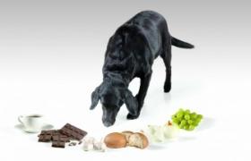 La importancia del sabor de los alimentos