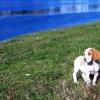 Consejos preventivos: Tranqueobronquitis infecciosa canina