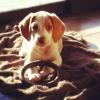 ¿Nuevo cachorro en casa? te damos unos consejos (II)