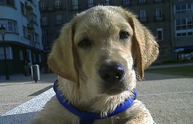 ¿Nuevo cachorro en casa? te damos unos consejos (I)