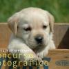 Concurso fotográfico clínica veterinaria Tui