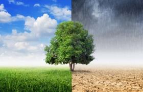 OTRAS CONSECUENCIAS DEL CAMBIO CLIMÁTICO