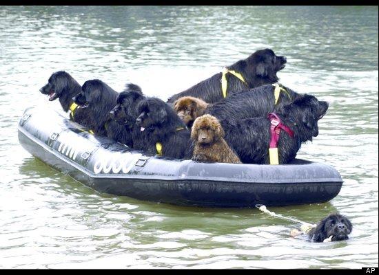 perros de rescate italianos