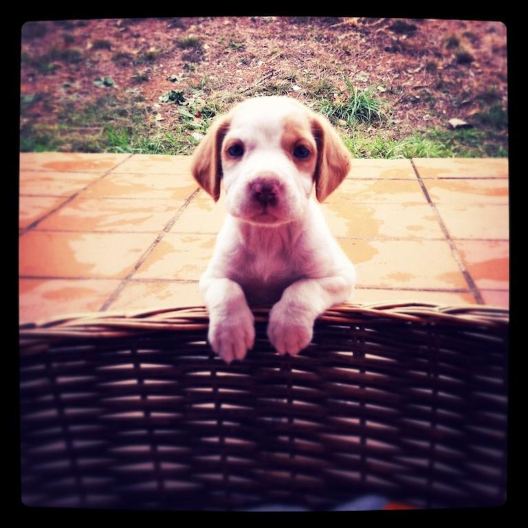 cuidados del cachorro - clinica veterinaria tui